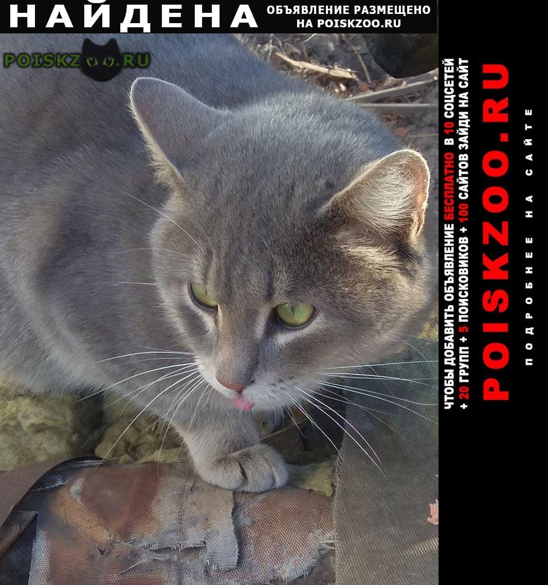 Найден кот или кошка г.Нижний Новгород