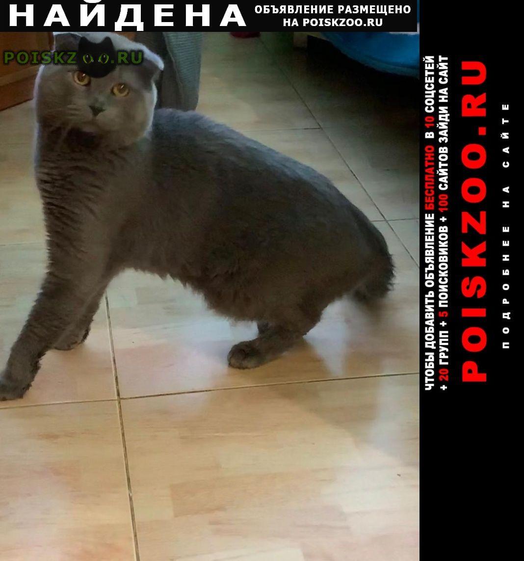 Найден кот г.Севастополь