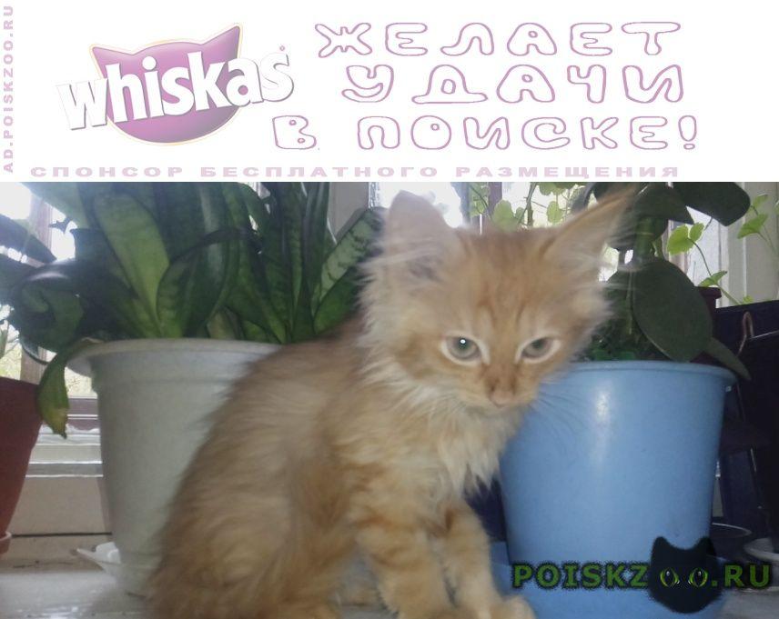 Найдена кошка отдам в хорошие руки г.Киров (Кировская обл.)