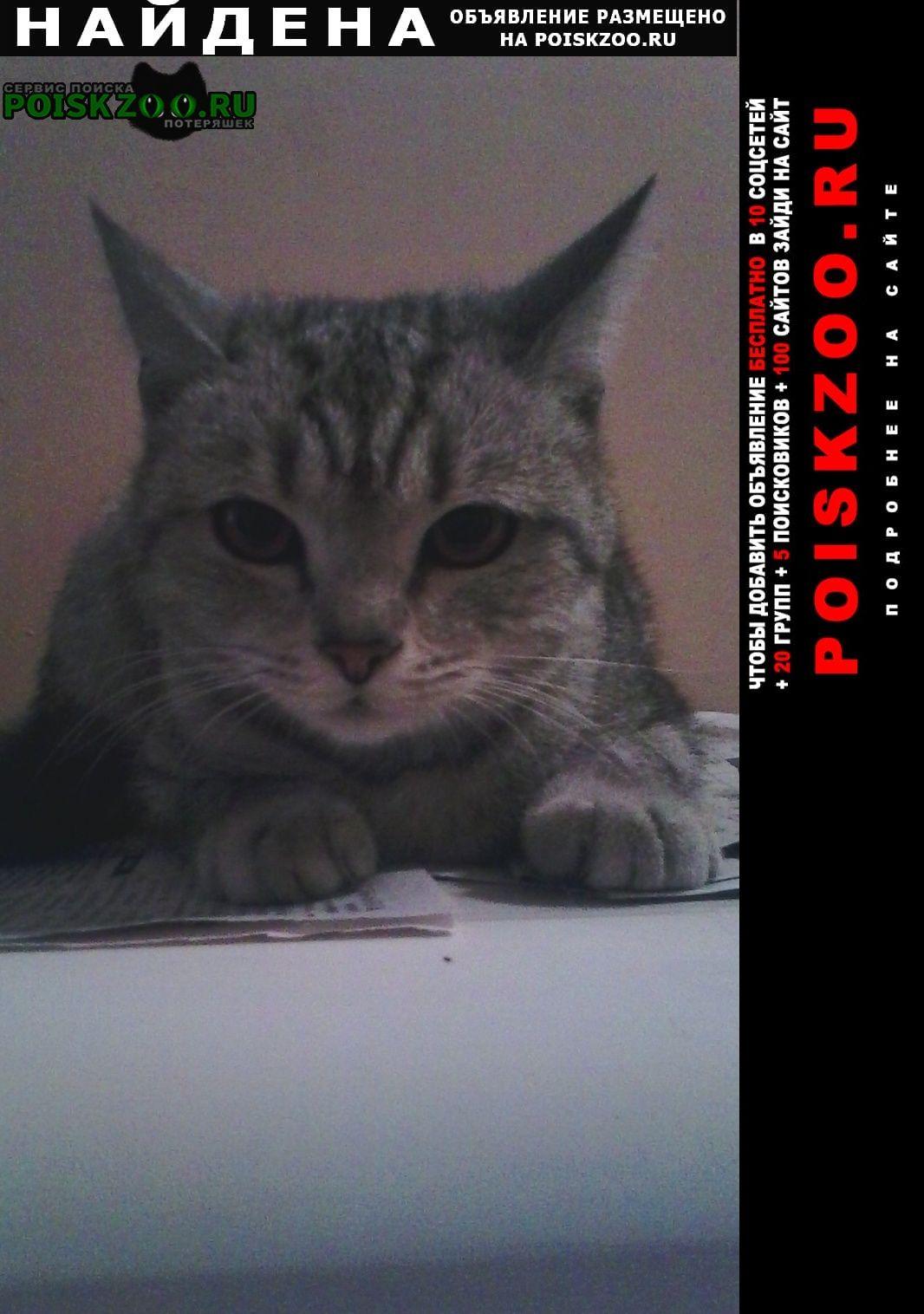 Найдена кошка Ленинск-Кузнецкий