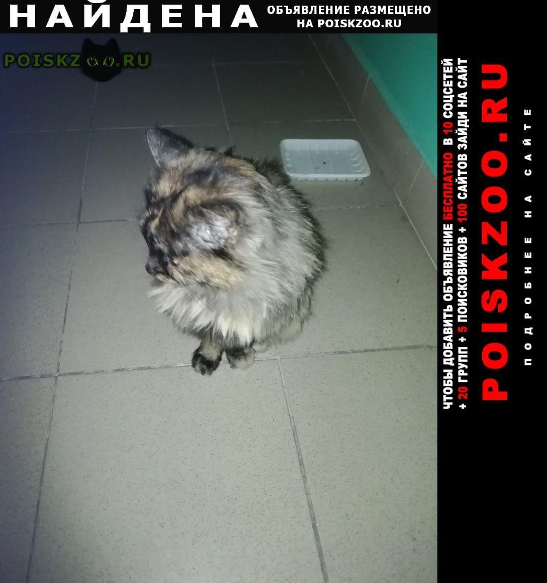 Найдена кошка г.Чита