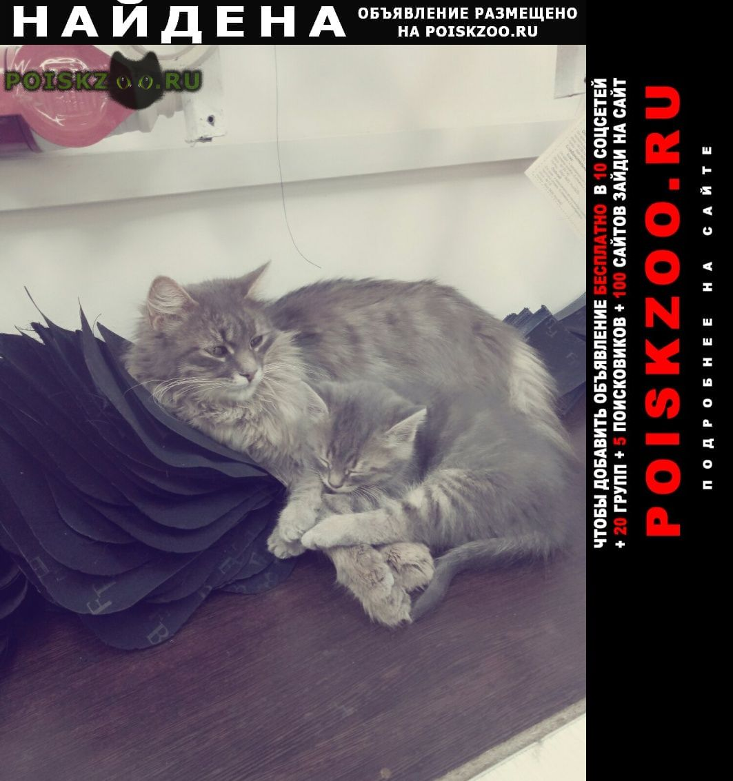 Найдена кошка п. часцы г.Кубинка