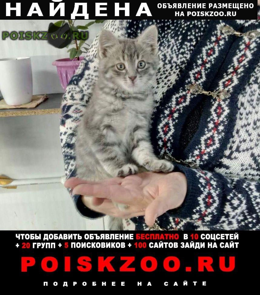 Найден котёнок мальчик в заботливые руки г.Кубинка