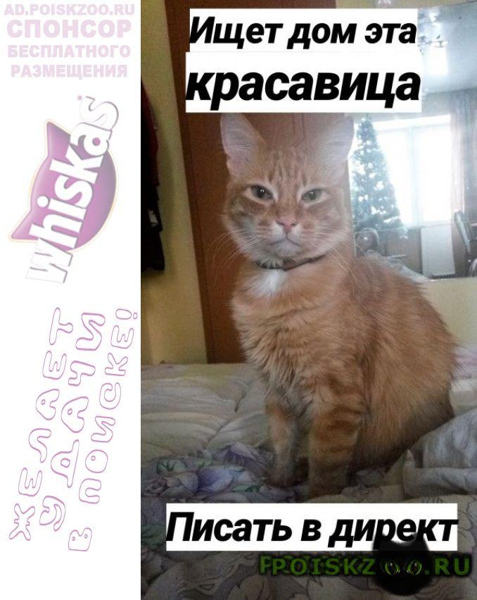 Найдена кошка ищет добрые руки г.Киров (Кировская обл.)
