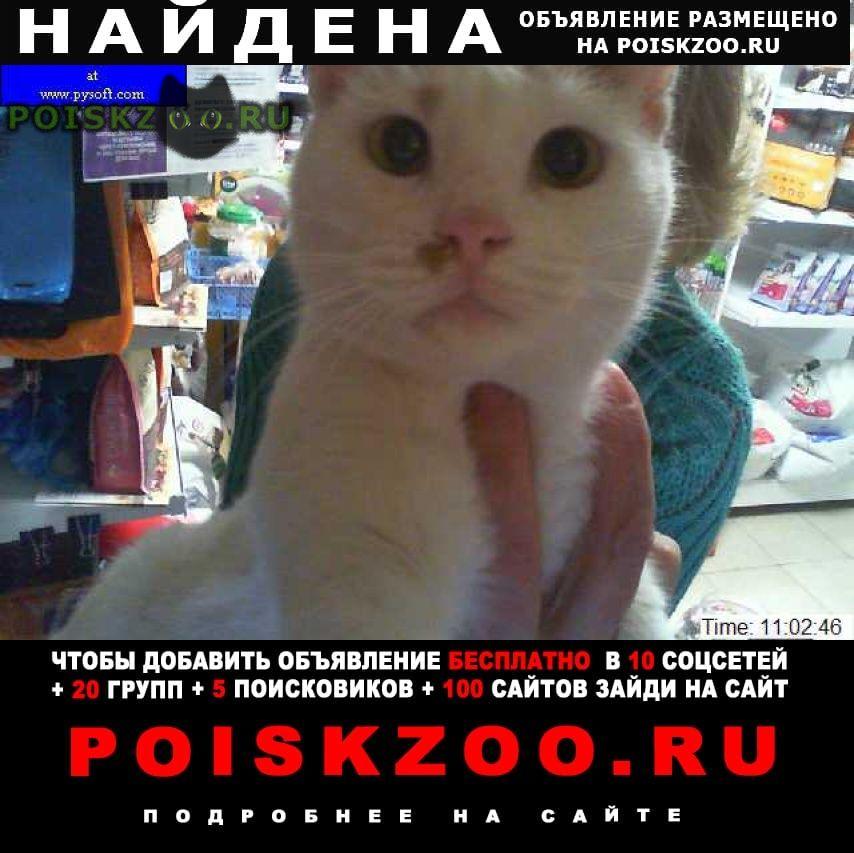 Найден кот молодой г.Краснодар