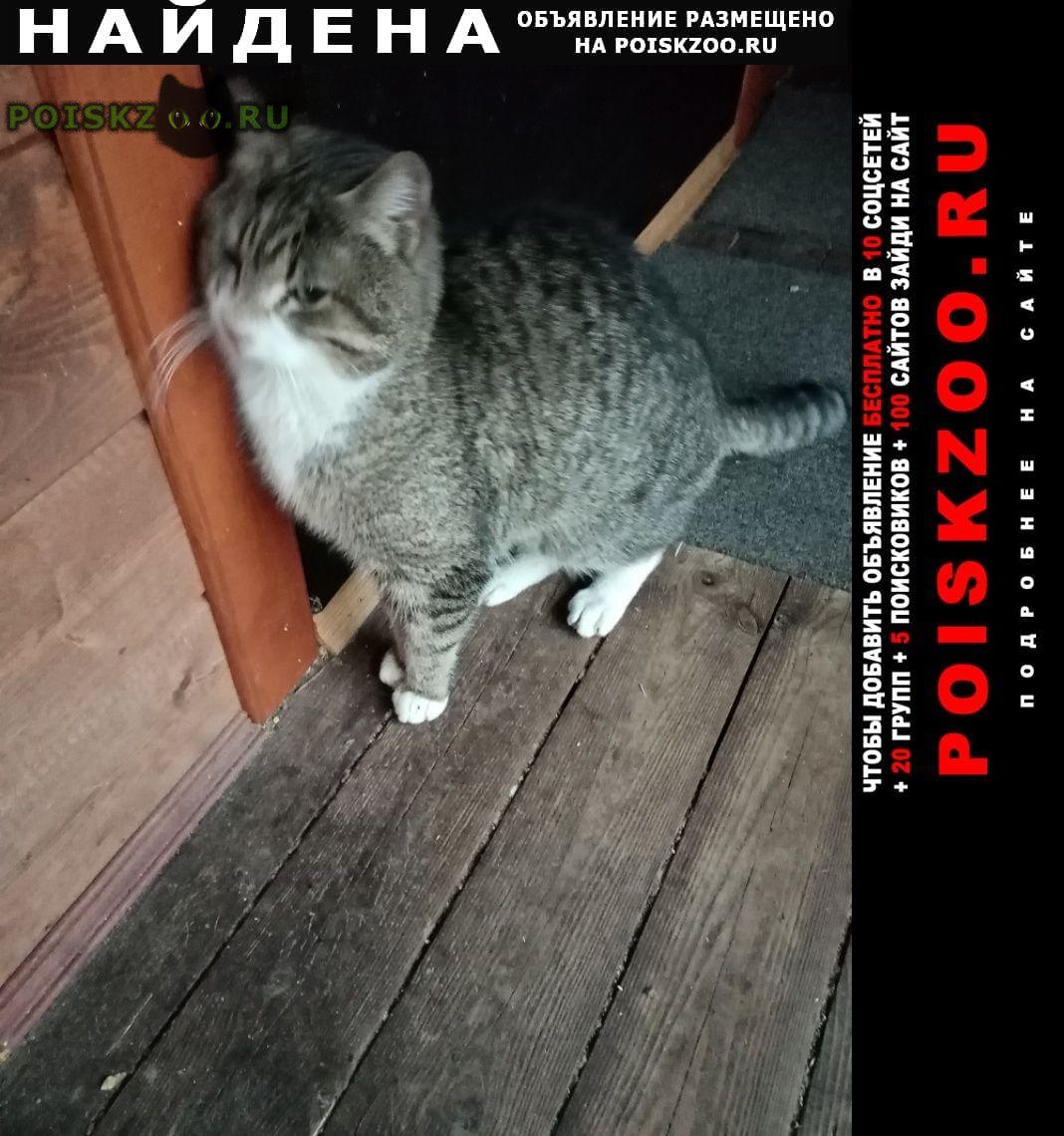 Найден кот, домашний прибился снт брусничка г.Волхов