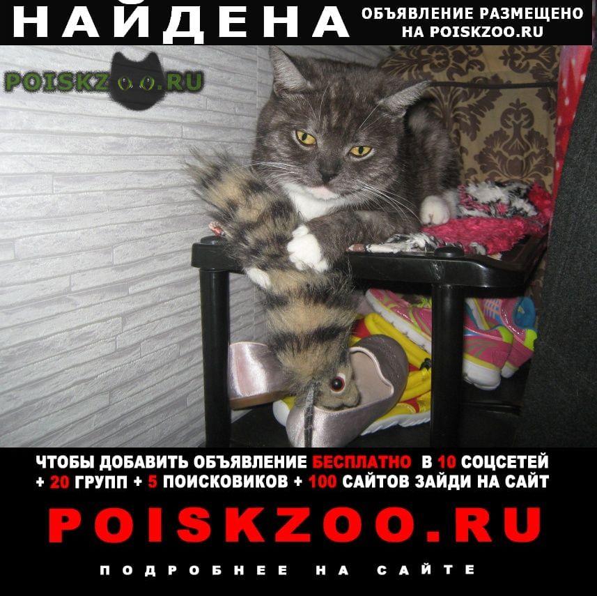 Найдена кошка молодая киска Верхняя Пышма