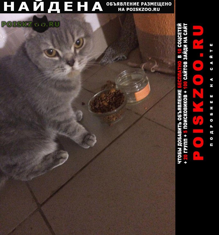 Найдена кошка г.Долгопрудный