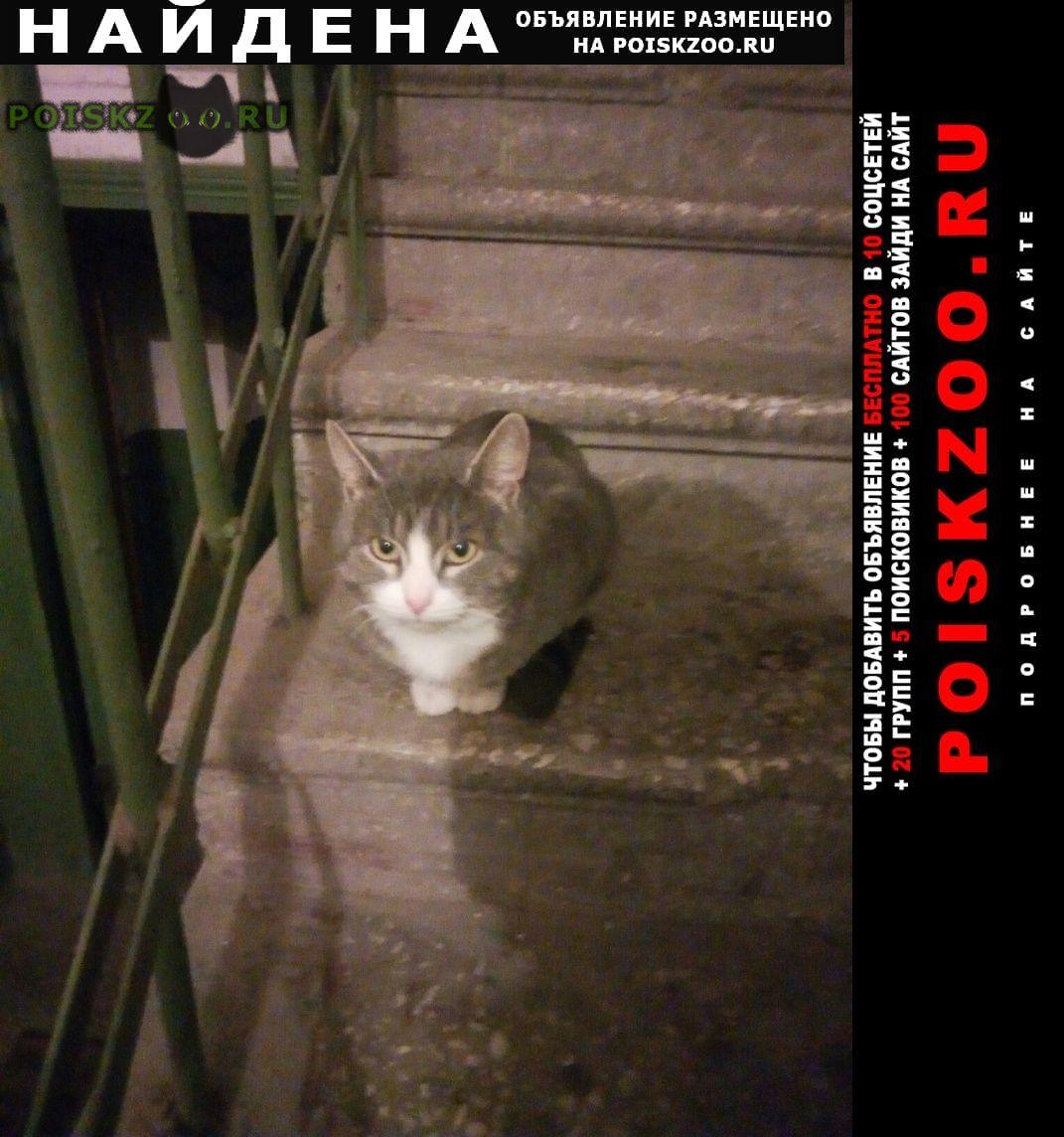 Найдена кошка Курган