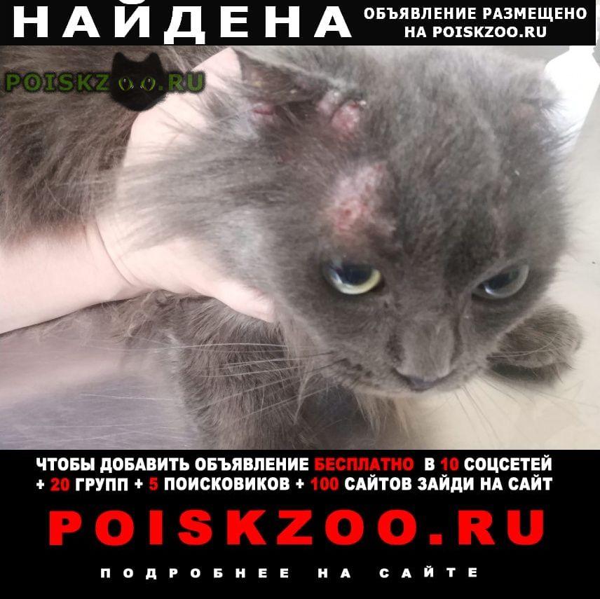 Найдена кошка Орехово-Зуево