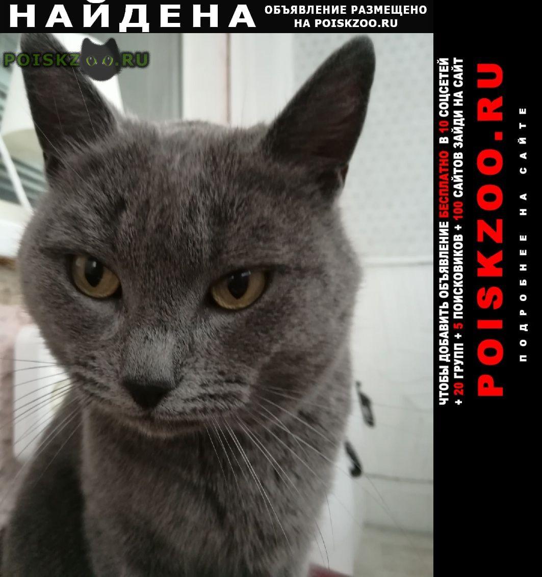Найден кот Саранск
