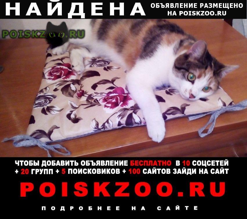 Найдена кошка г.Кемерово