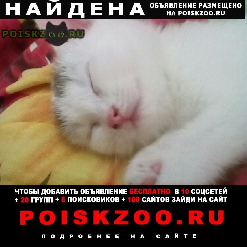 Найдена кошка Киров (Кировская обл.)