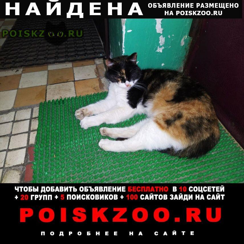 Найдена кошка г.Видное