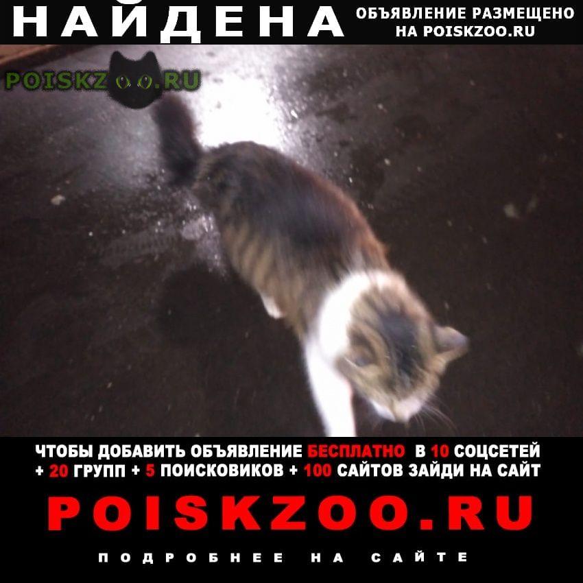 Найдена кошка бегает на улице вечером Москва