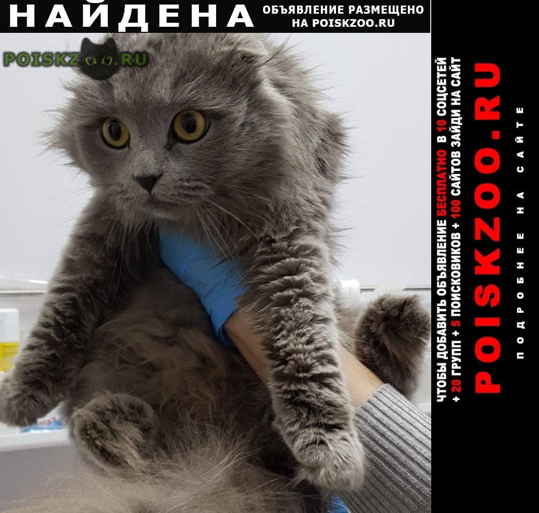 Найдена кошка г.Казань