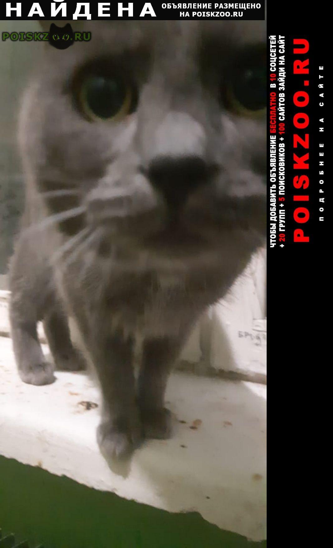 Найден кот Троицк