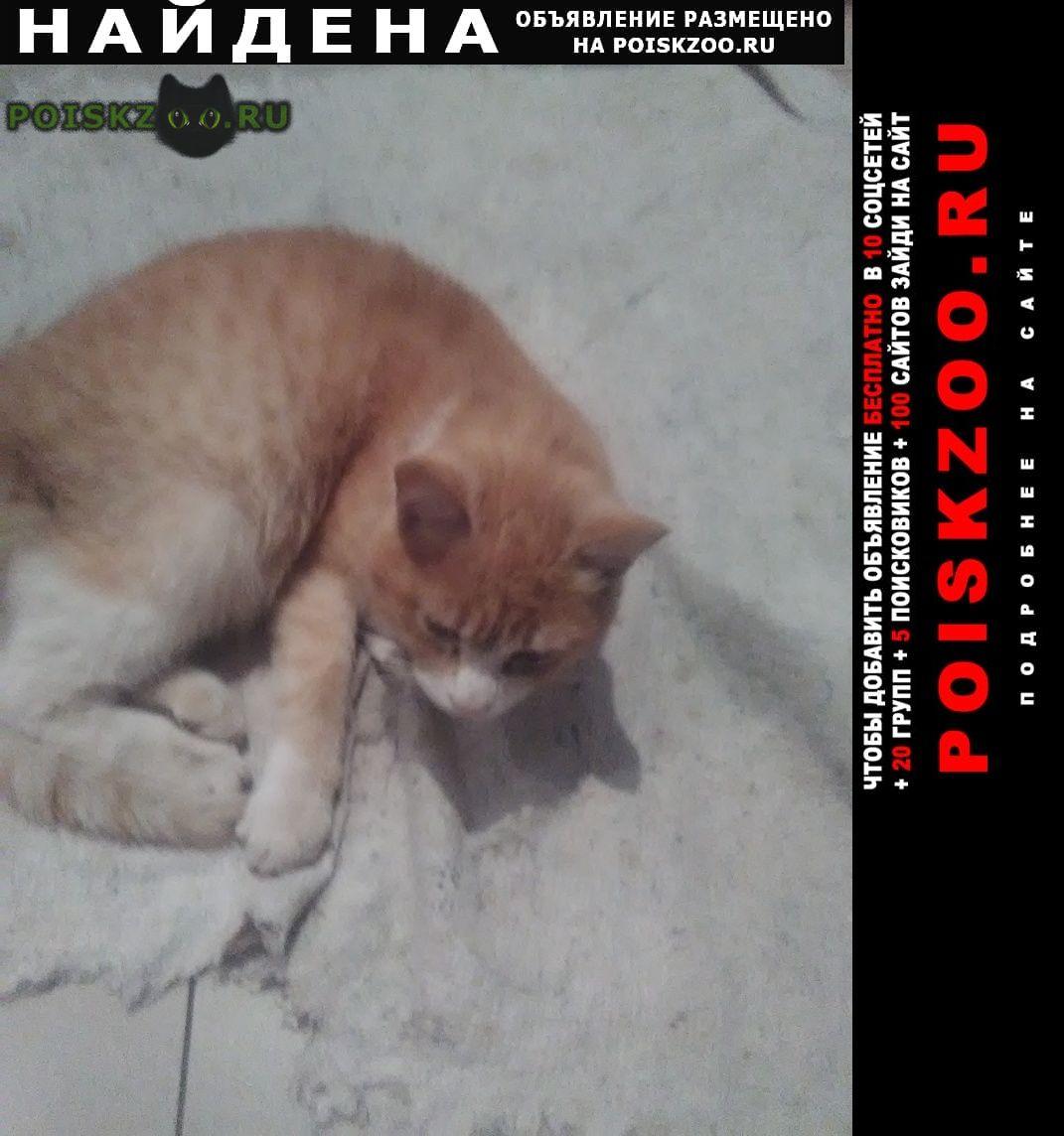 Найден кот помогите найти хозяина. Воронеж