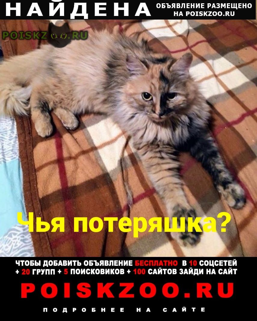 Найдена кошка г.Ростов-на-Дону