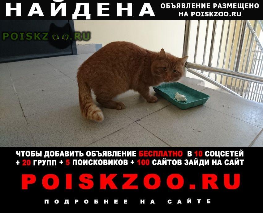 Найдена кошка потеряшка г.Сергиев Посад