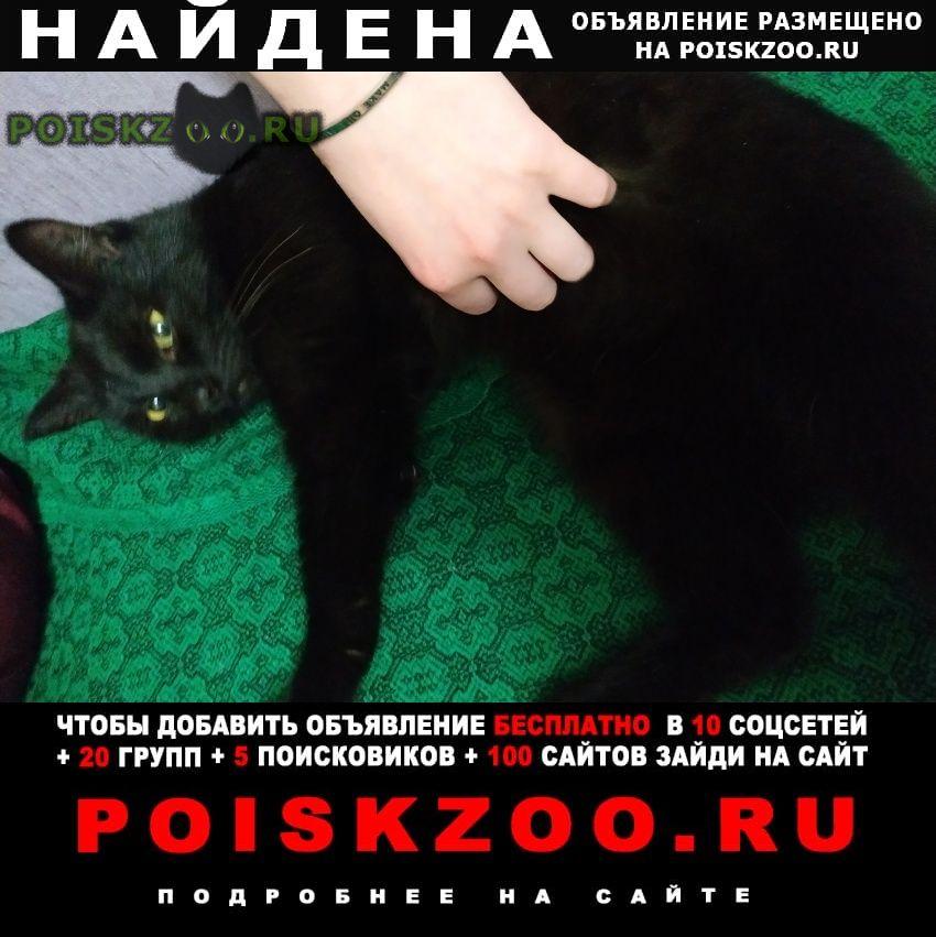 Найден кот Ангарск