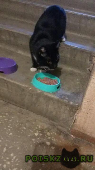 Найдена кошка г.Тверь