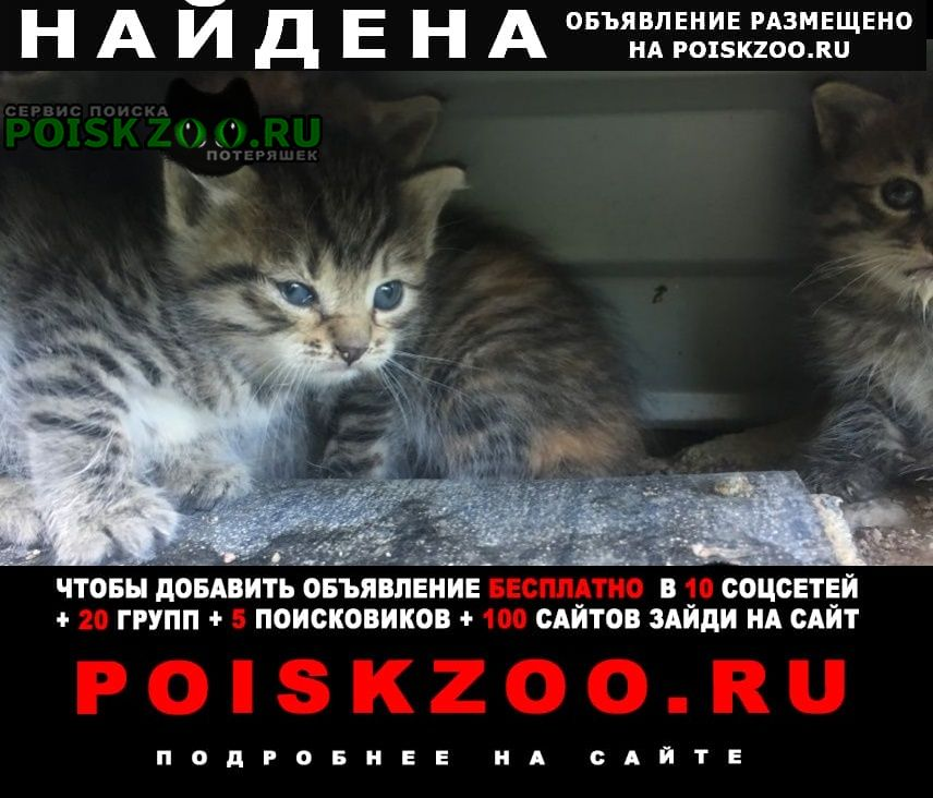 Найден кот ята Гатчина