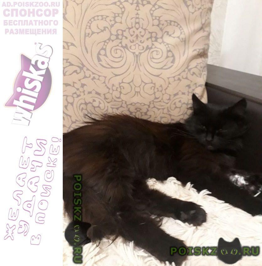 Найдена кошка окрас чёрный г.Ногинск