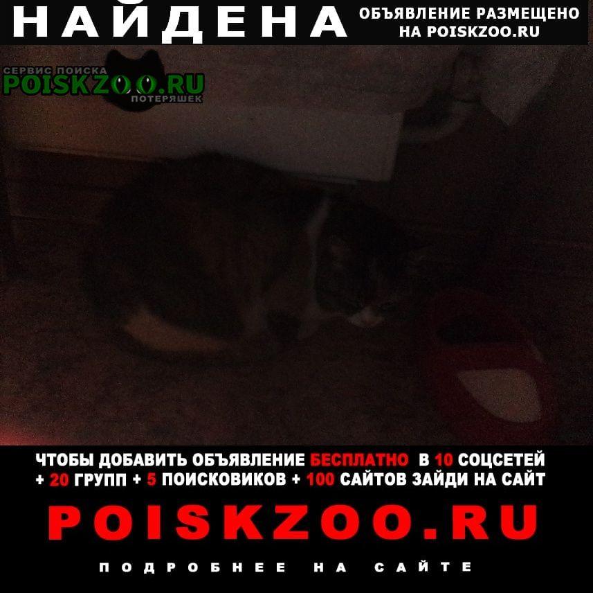 Найдена кошка Балашиха