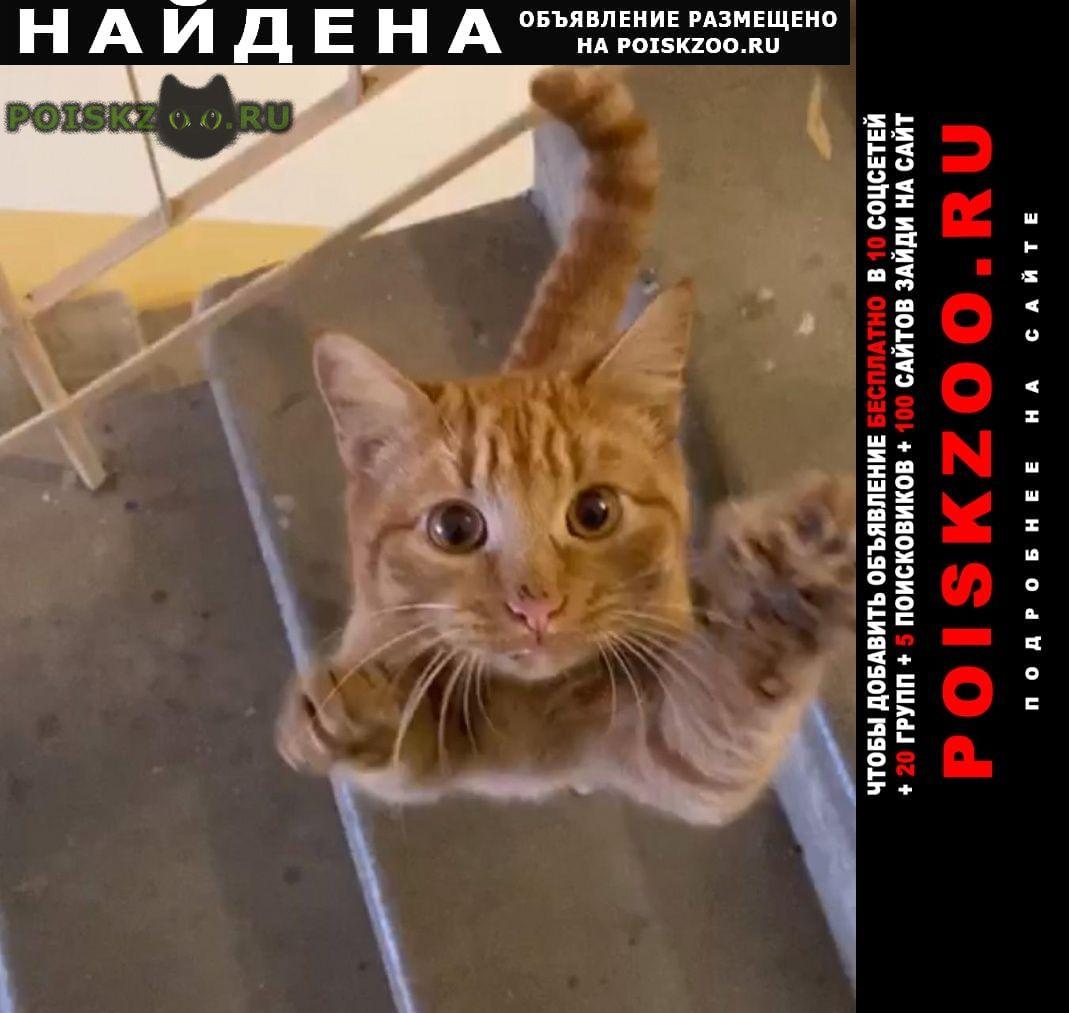 Найдена кошка меридианная 14 г.Казань