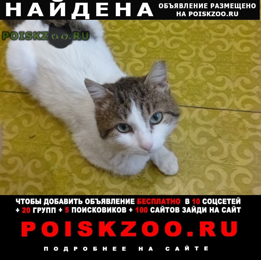 Найден кот г.Омск