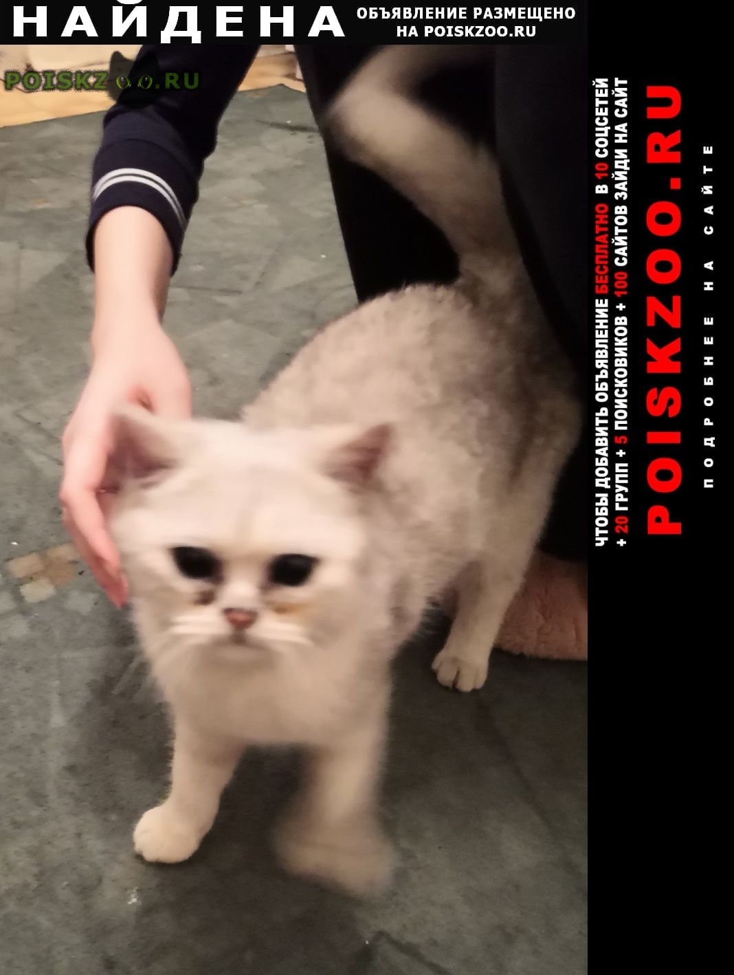 Найдена кошка Мытищи