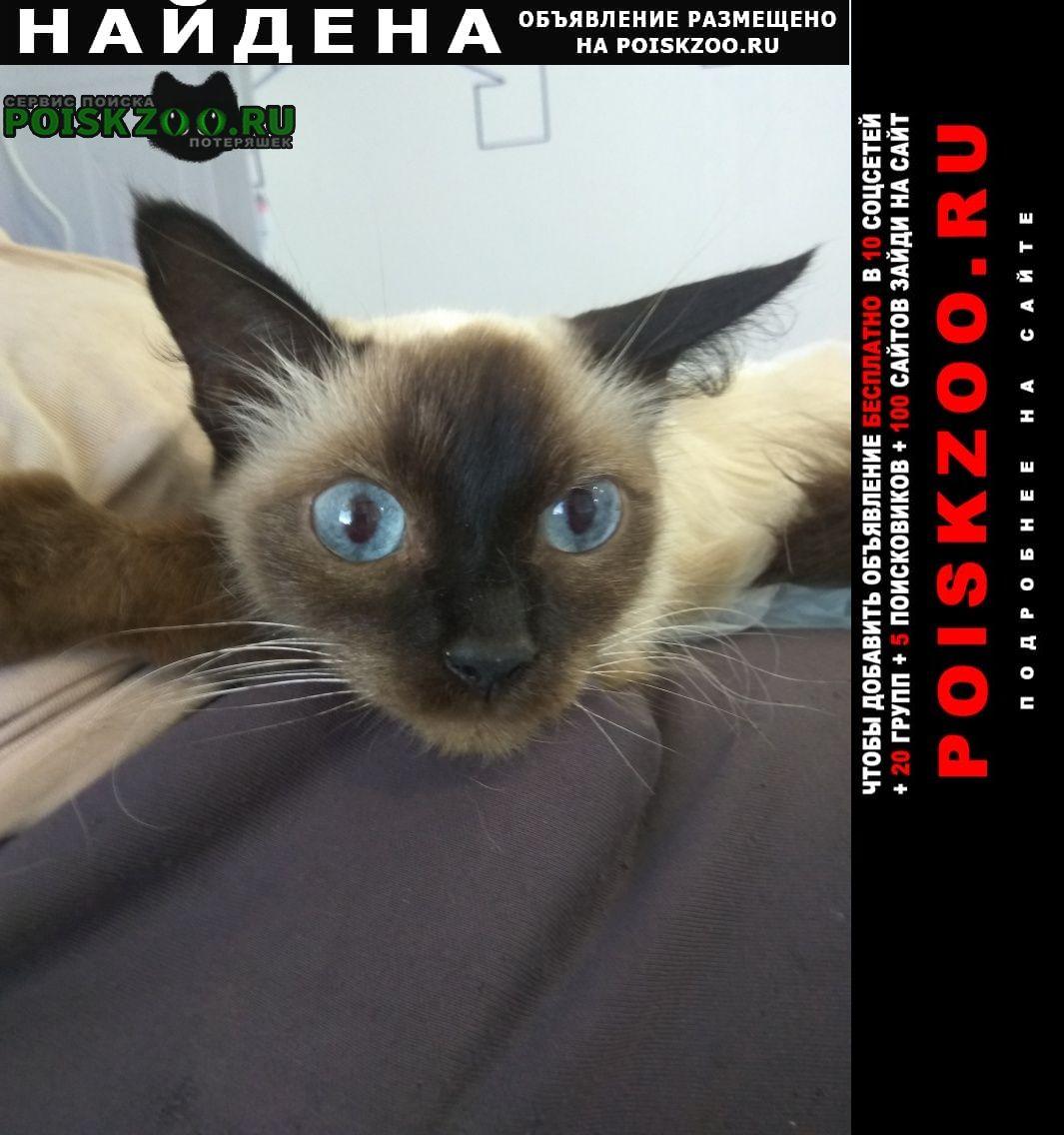 Найдена кошка ул видова дом 196, Новороссийск