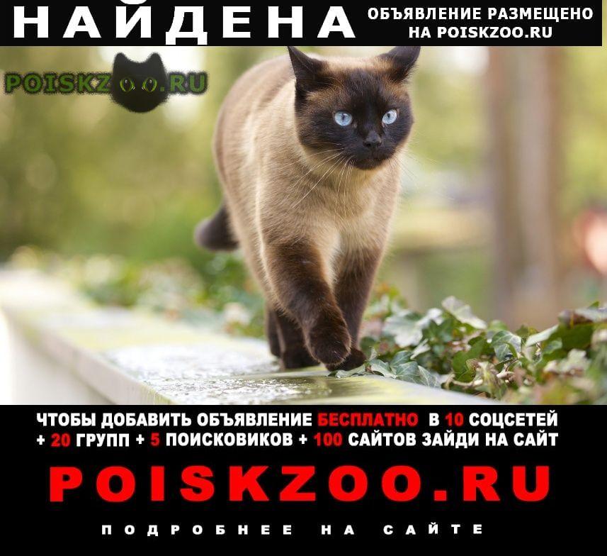 Найдена кошка в нижнем новгороде, во дворе по ул. звез г.Нижний Новгород