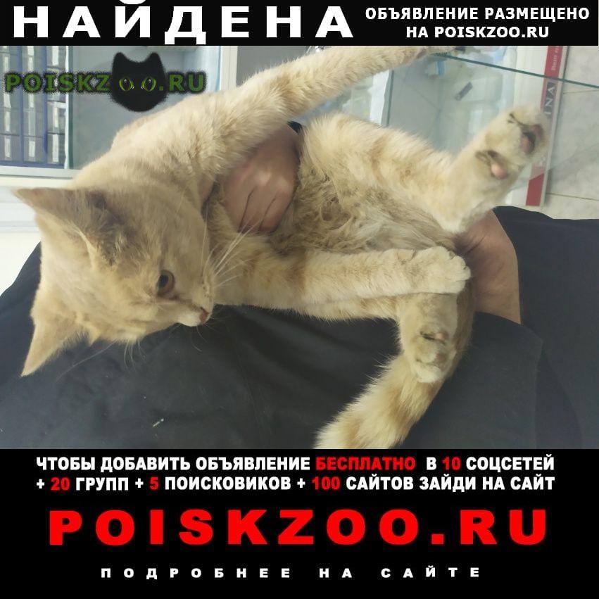 Найдена кошка рыжая Москва