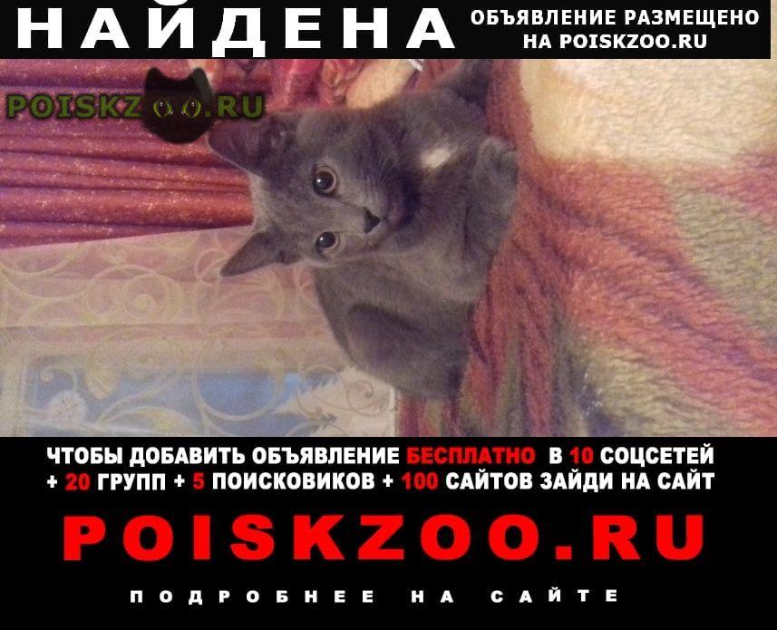 Найден кот серый Верхняя Пышма