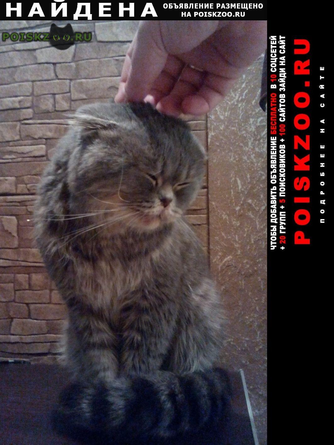 Найден кот г.Пенза