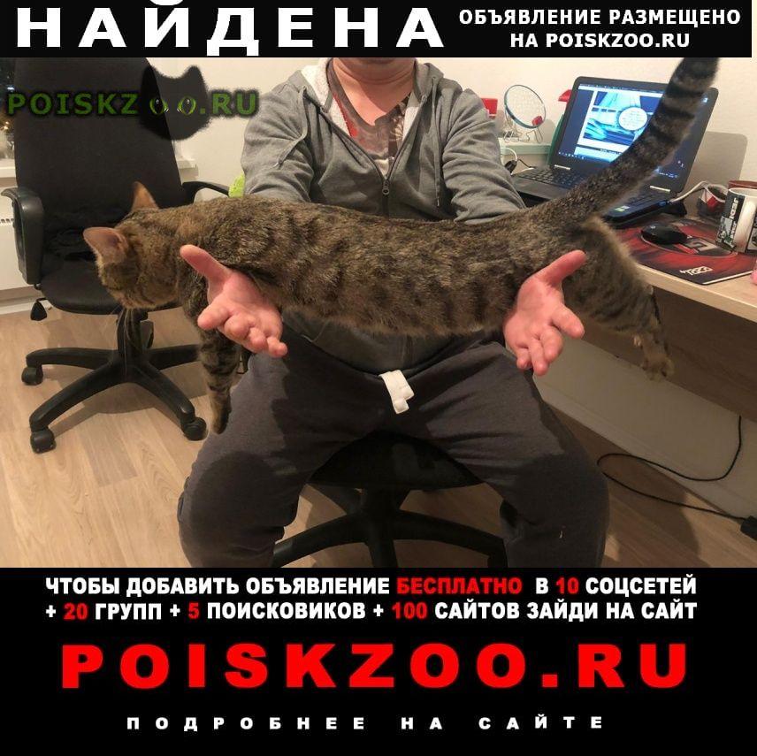Найден кот г.Мытищи