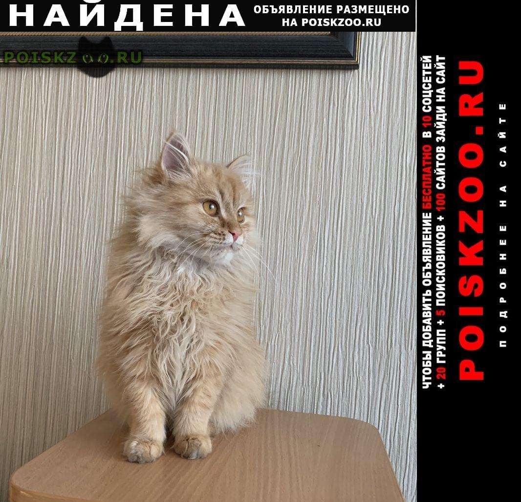 Найден котёнок Иркутск