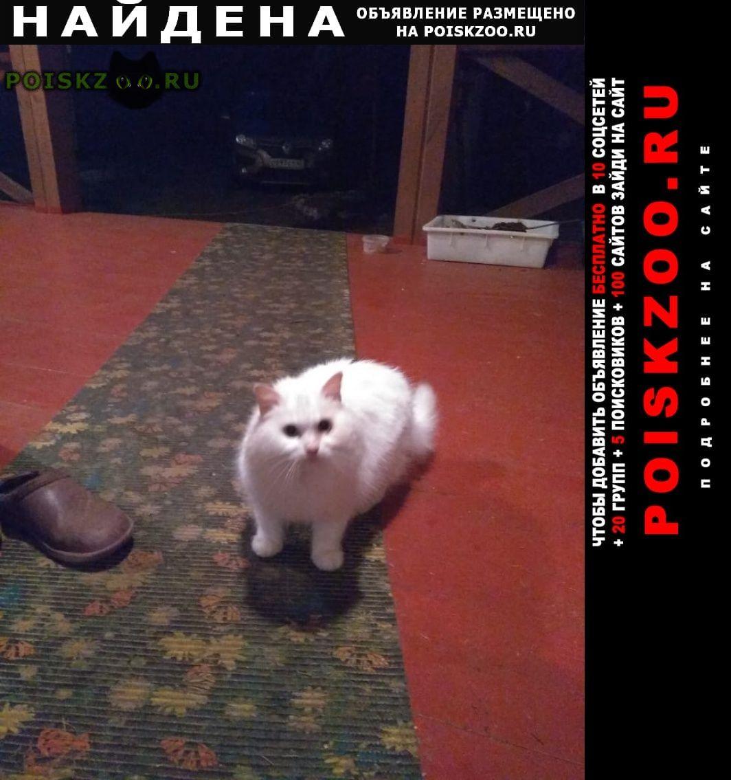 Найден кот кингисеппский р-н, ло, снт корвет г.Санкт-Петербург