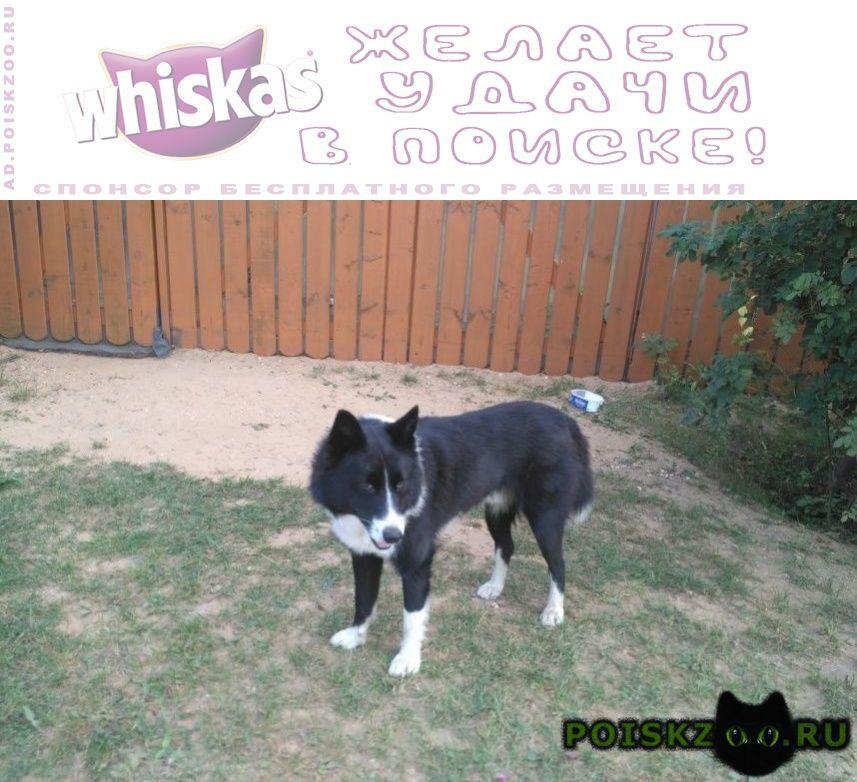 Найден кот два дня как прибился, ищет свой дом г.Москва