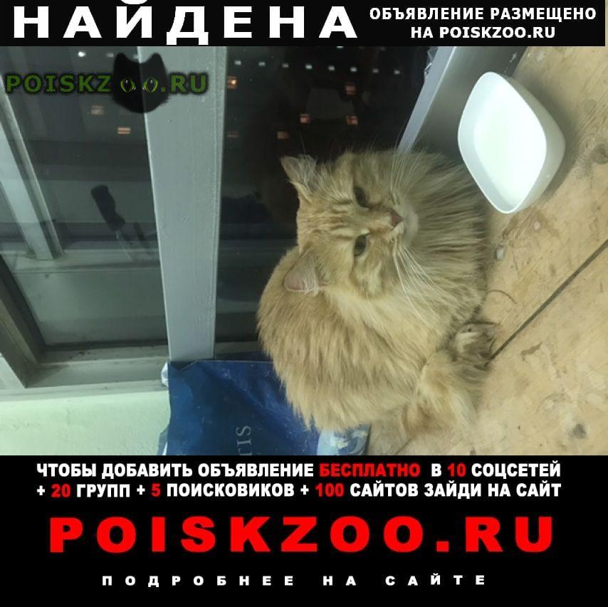 Найден кот Зеленоград
