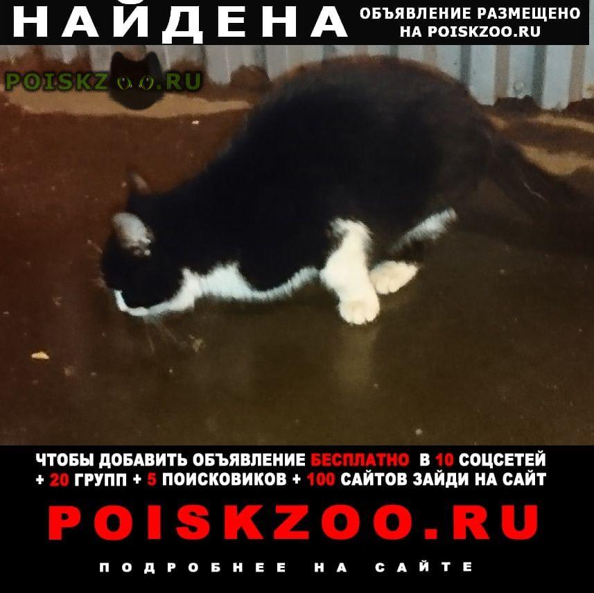 Найдена кошка (замечена ) г.Москва