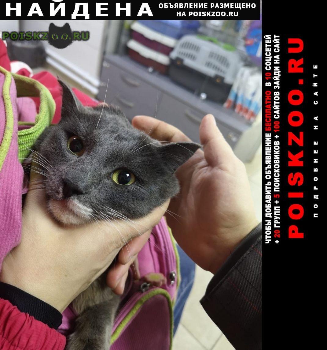 Найден кот в районе досов Хабаровск