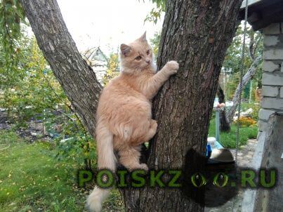 Найден кот г.Тольятти