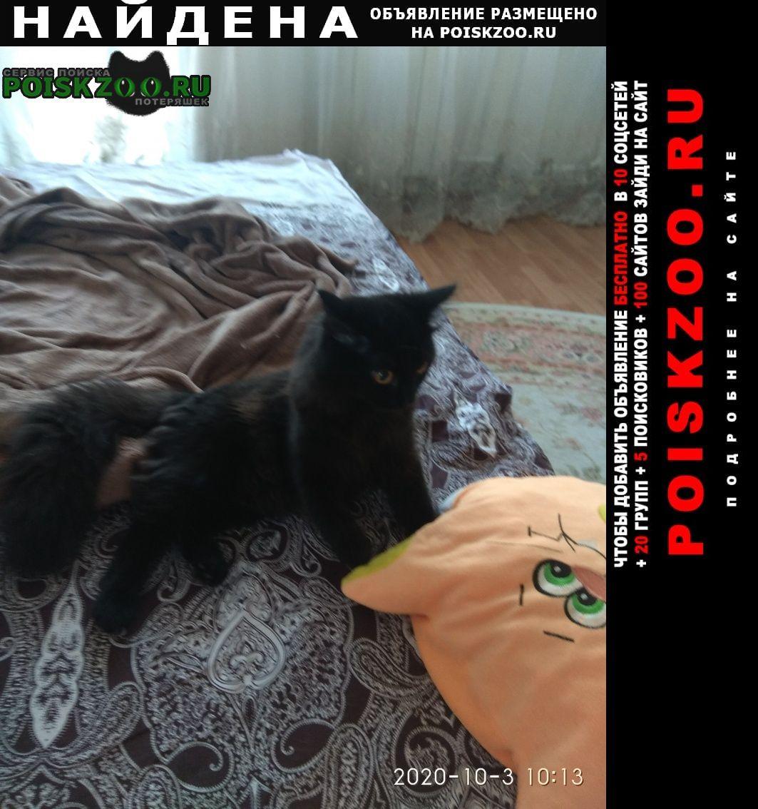 Кемерово Найдена кошка вроде бы, хотя может быть это кот