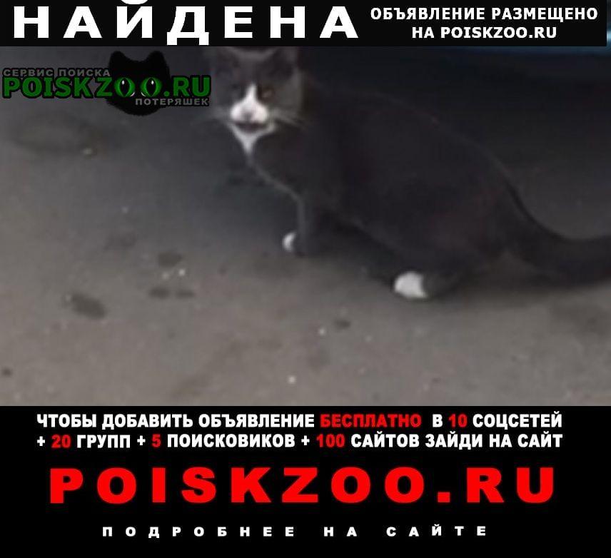 Москва Найдена кошка кот серый с белыми лапа