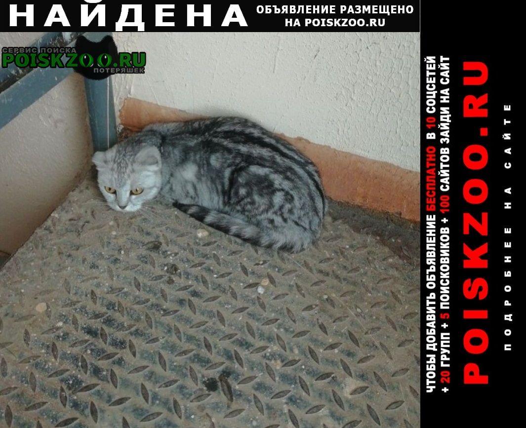 Найдена кошка Оренбург