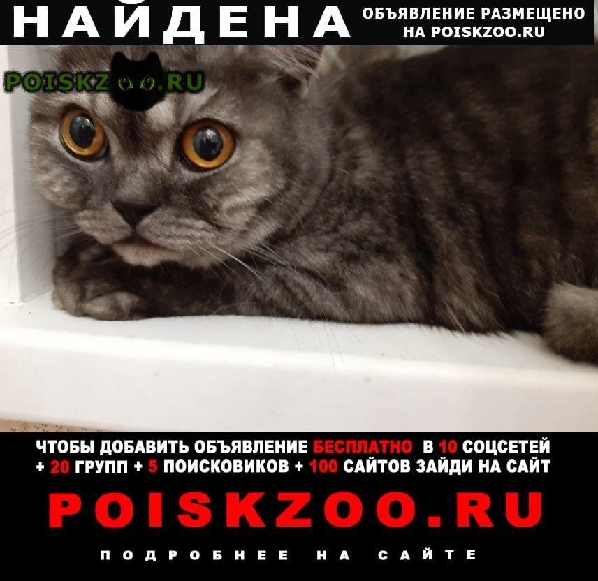 Найден кот у меня на передержке г.Климовск