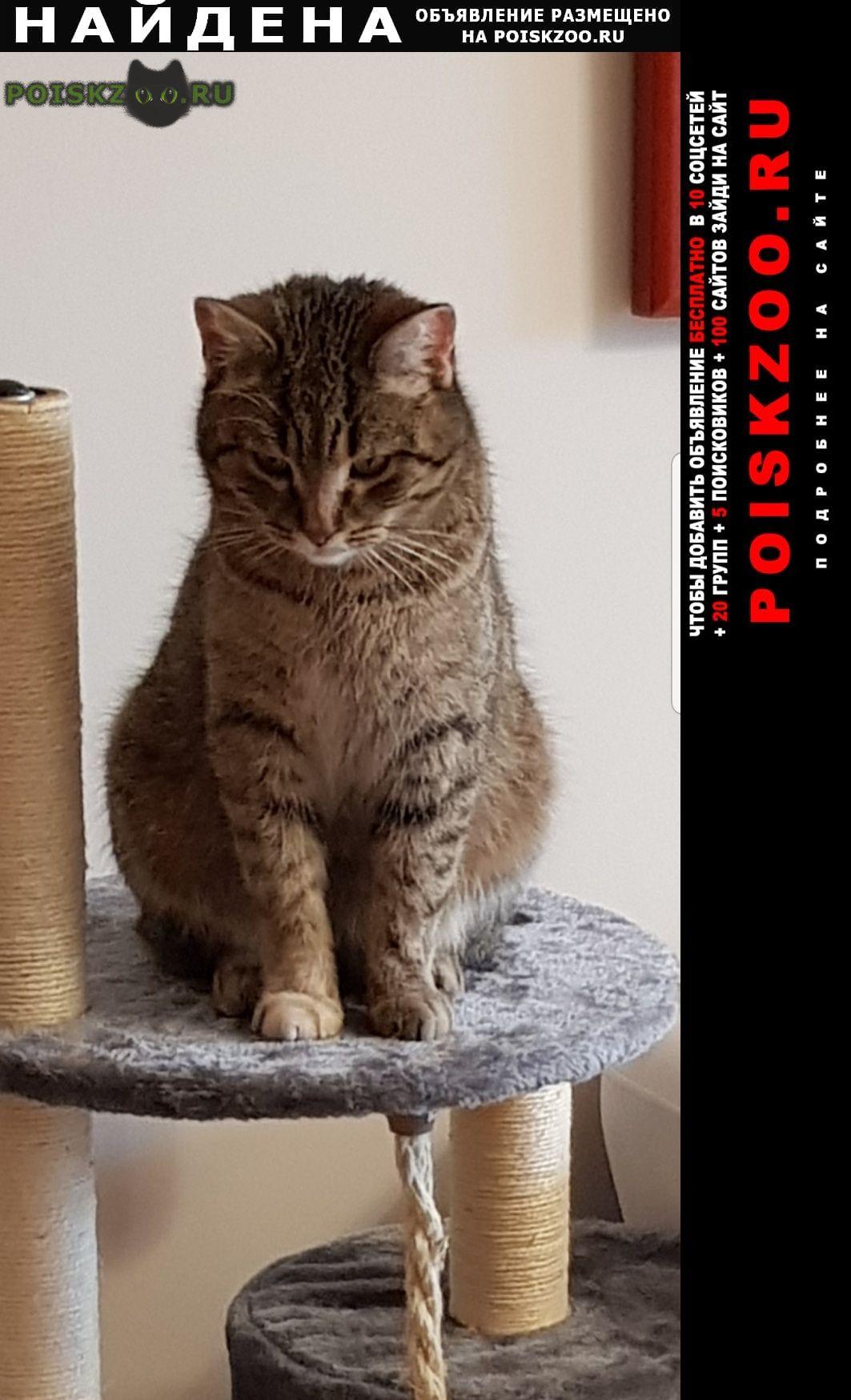 Найдена кошка тоскует по хозяину Светлогорск